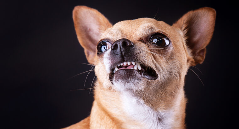 Aggression Problem in Dogs | Why Dogs Attack?