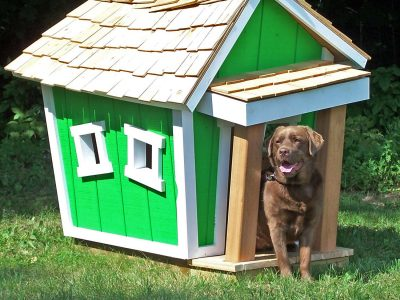 Dog Kennels and Entry-Exit Doors