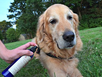 What is Dog Repellent? | Dog Repellent Types