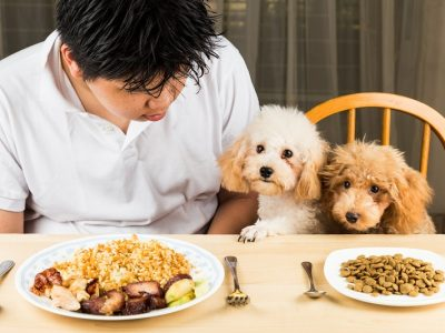 What is Dog Food? | What are the dog food types?
