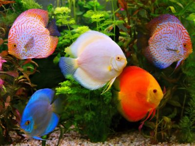 Fish Vitamin and Mineral Types