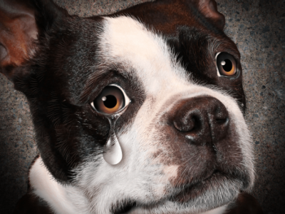 Do Dogs Cry? | What Do Dogs' Tears Mean |Why Dogs Cry?