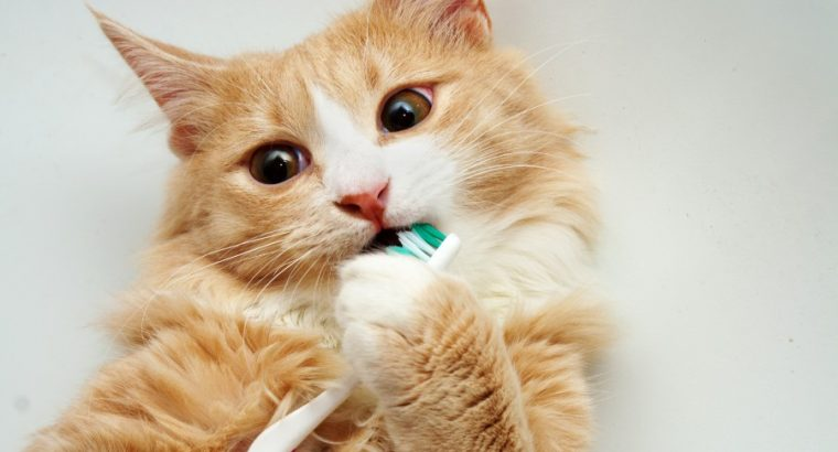 Cat Mouth and Dental Health Products