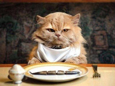 Nutrition in Cats | How should cats feed?