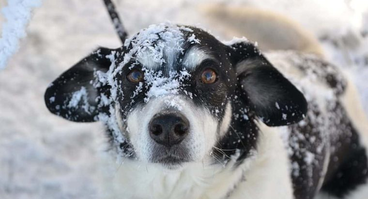 Can Dogs Withstand Cold Weather? | Cold Weather Care For Dogs