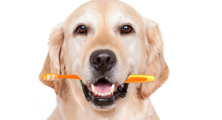 Dental Care in Dogs   How To Take Care Of Dogs?