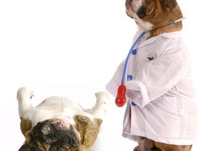 The Dog Health | Important Issues About Dog Health
