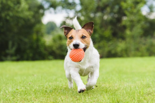 dogs need daily exercise