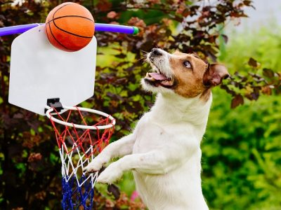 The Importance of Exercise in Dogs | Dogs Need Daily Exercise