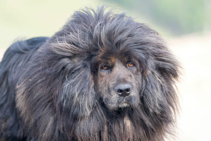 hair-loss in dogs