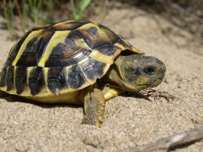 Land Turtle Care and Nutrition | Land Turtle Nutrition