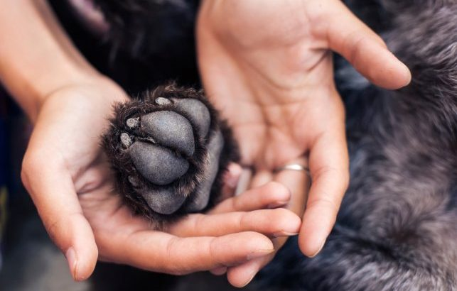 Paw Care in Dogs | How to Care for the Paw in Dogs?