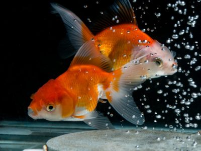 Causes of Stress in Fish | How to Prevent Stress in Aquarium Fish?